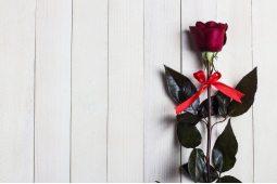 Голландские розы (4)