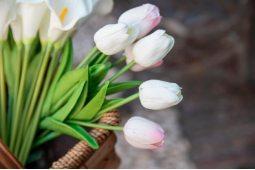 Тюльпаны в корзине (3)