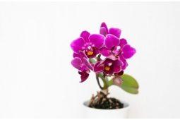 Орхидеи (4)