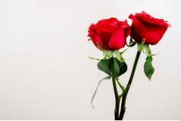 Розы поштучно (16)