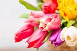 Тюльпаны (26)
