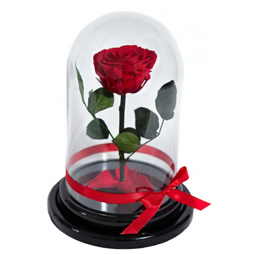 Красная роза в стеклянной колбе