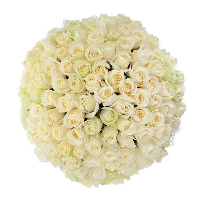 "Белая роза ""Аваланж"" оптом 70 см."