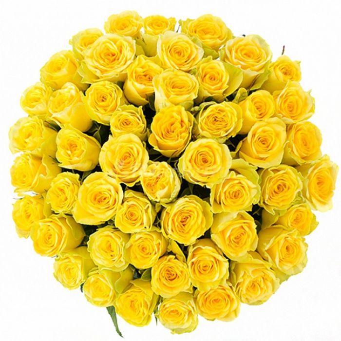 "Желтая роза ""Пенни Лейн"" оптом"
