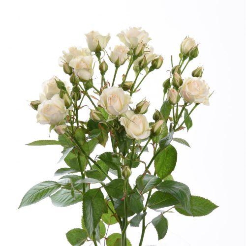 """Кремовая роза """"Крем Грация"""" оптом 70см."""