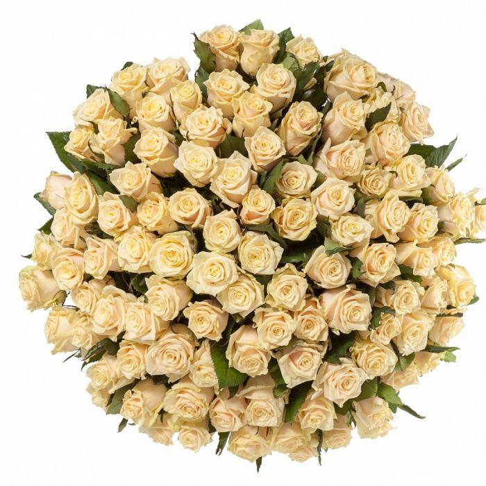 """Кремовая роза """"Талея"""" оптом 80см."""
