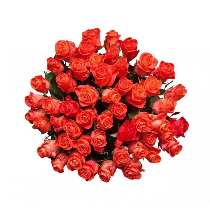 """Роза  """"Вау"""""""