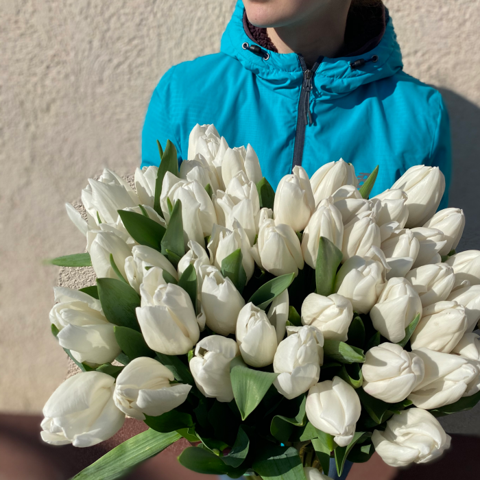 Белый тюльпан шт